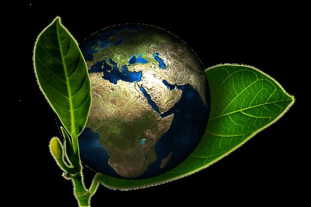 eco friendly organic
