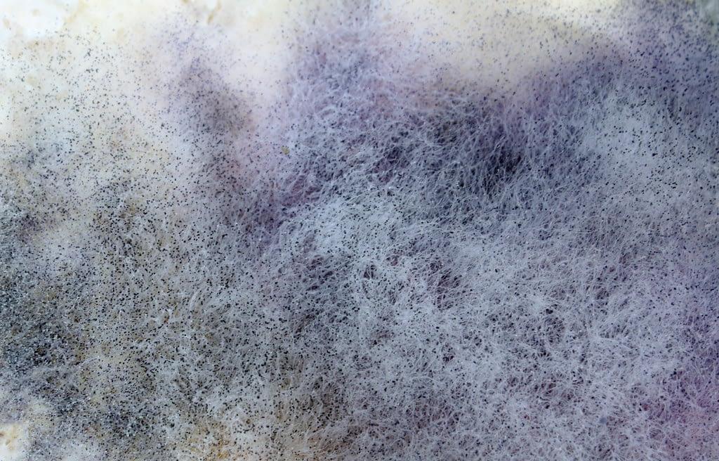 carpet mold